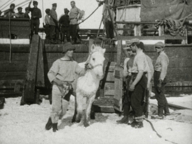 horse being taken of a ship